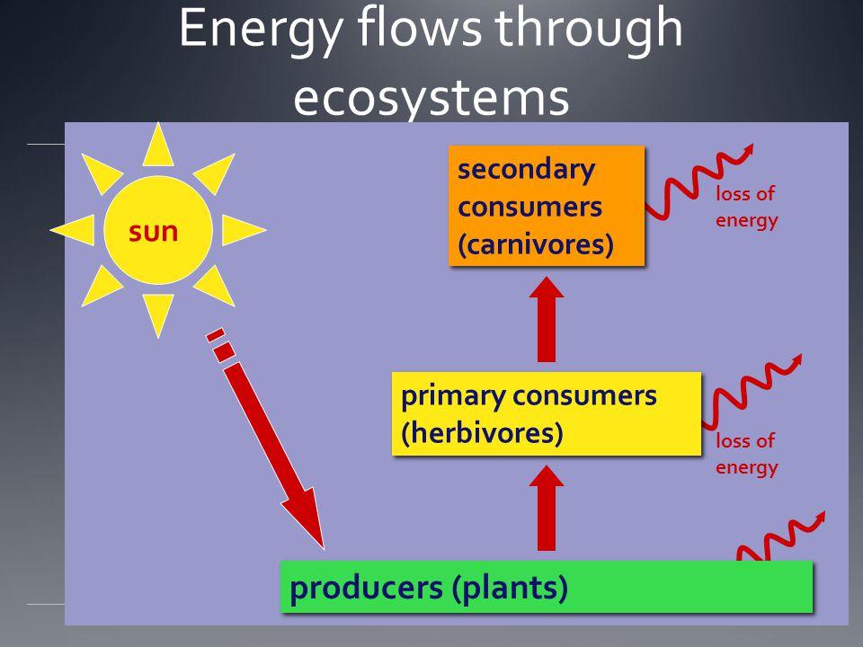 biosphere Ecosystem inputs energy flows through nutrients cycle inputs  energy  nutrients inputs  energy  nutrients