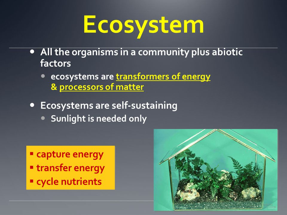 Essential Questions What limits the production in ecosystems? How do nutrients move in the ecosystem? How does energy move through the ecosystem?
