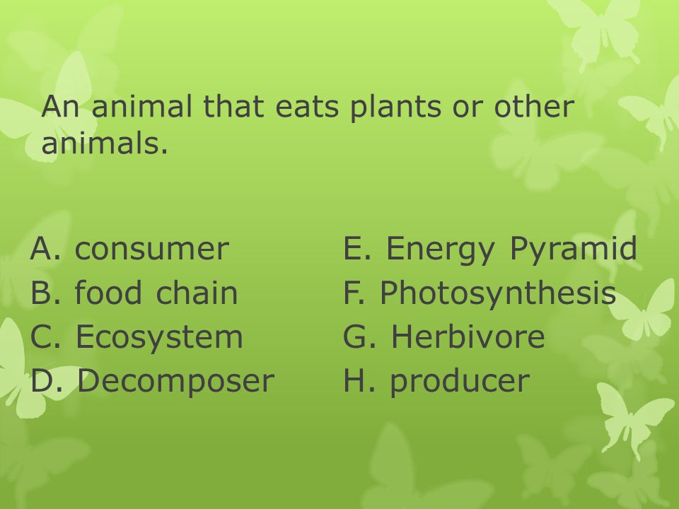 An animal that eats plants or other animals. A. consumer B. food chain C. Ecosystem D. Decomposer E. Energy Pyramid F. Photosynthesis G. Herbivore H.