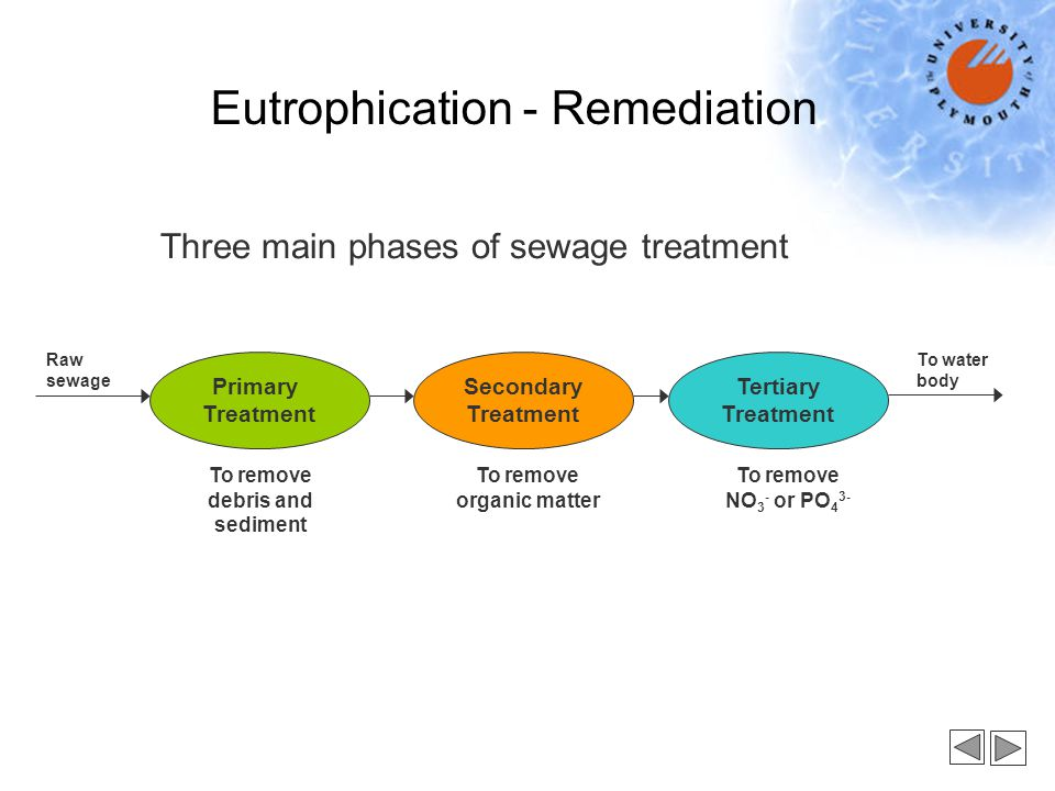 Primary Treatment Secondary Treatment Tertiary Treatment To remove debris and sediment To remove organic matter To remove NO 3 - or PO 4 3- Raw sewage To water body Three main phases of sewage treatment Eutrophication - Remediation