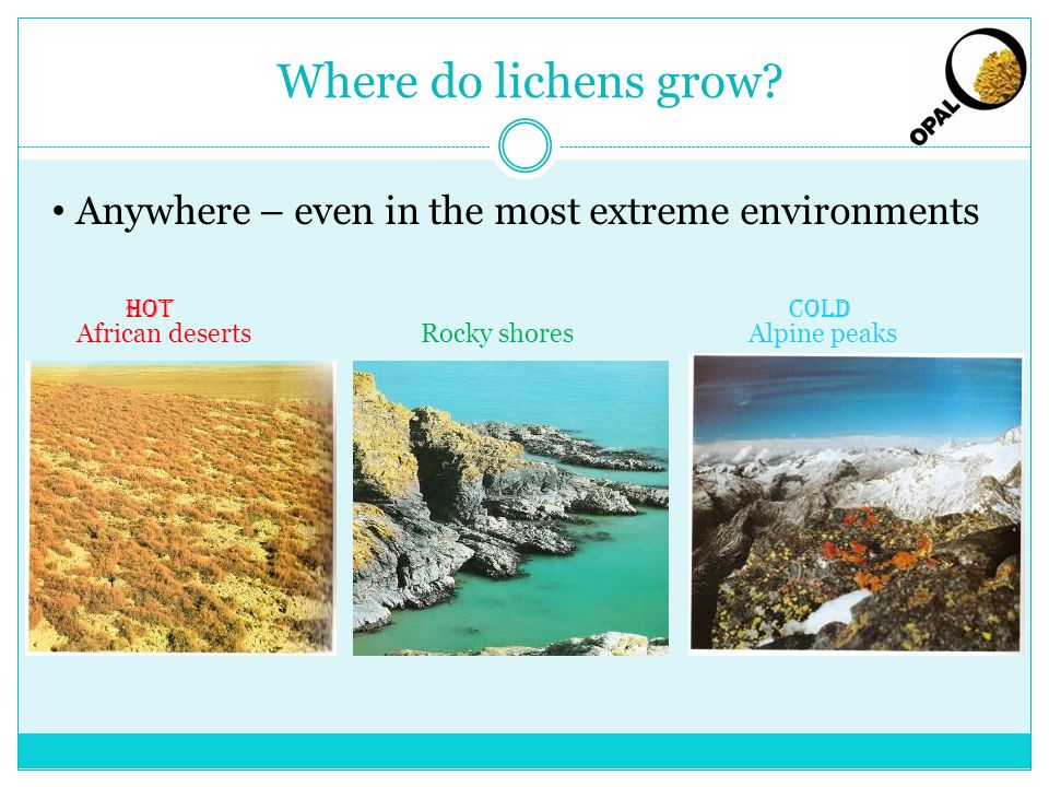 Where do lichens grow.