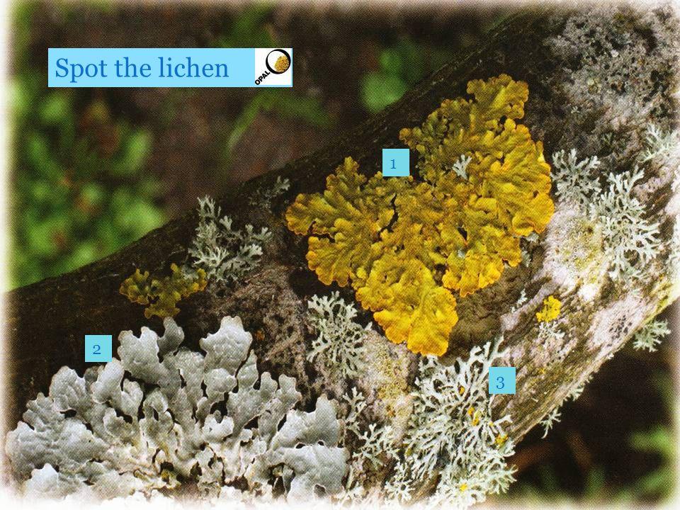 1 2 3 Spot the lichen