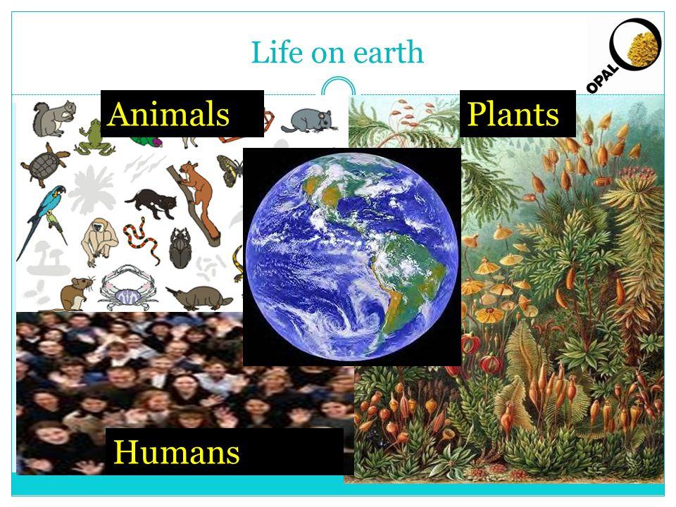Life on earth AnimalsPlants Humans