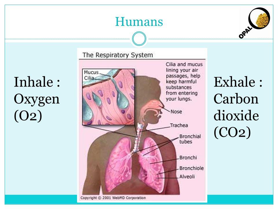 Inhale : Oxygen (O2) Exhale : Carbon dioxide (CO2)