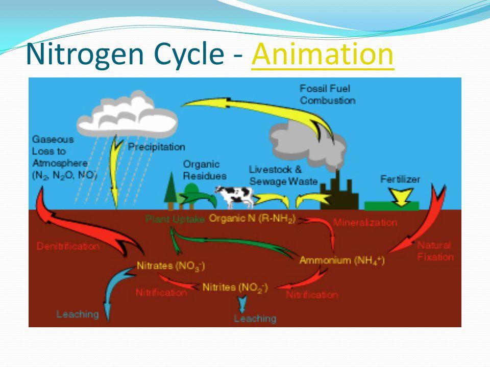 Nitrogen Cycle - AnimationAnimation