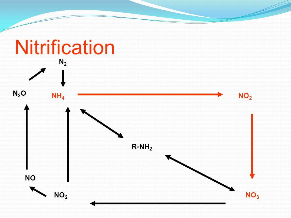 Nitrification R-NH 2 NH 4 NO 2 NO 3 NO 2 NO N2ON2O N2N2