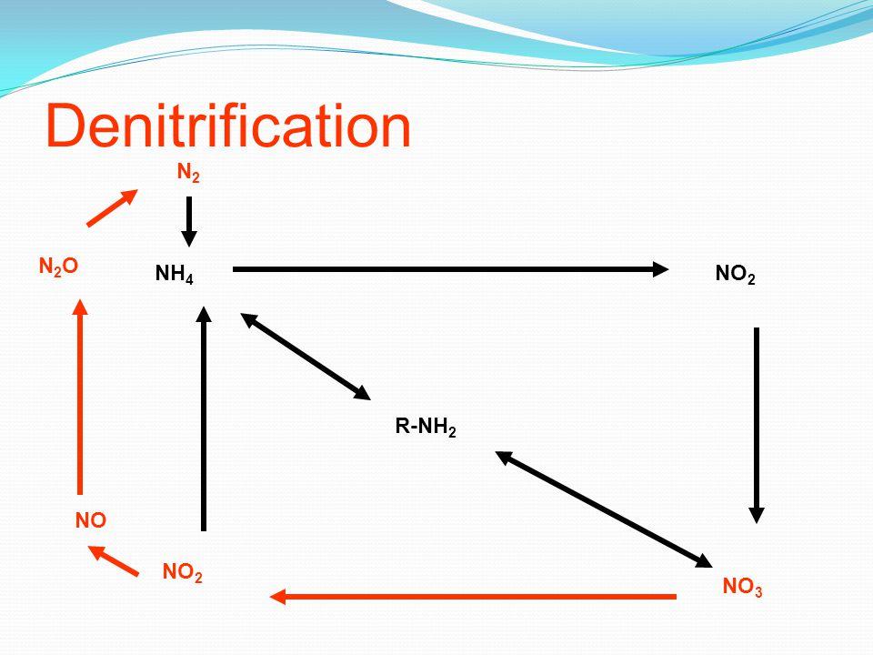 Denitrification R-NH 2 NH 4 NO 2 NO 3 NO 2 NO N2ON2O N2N2