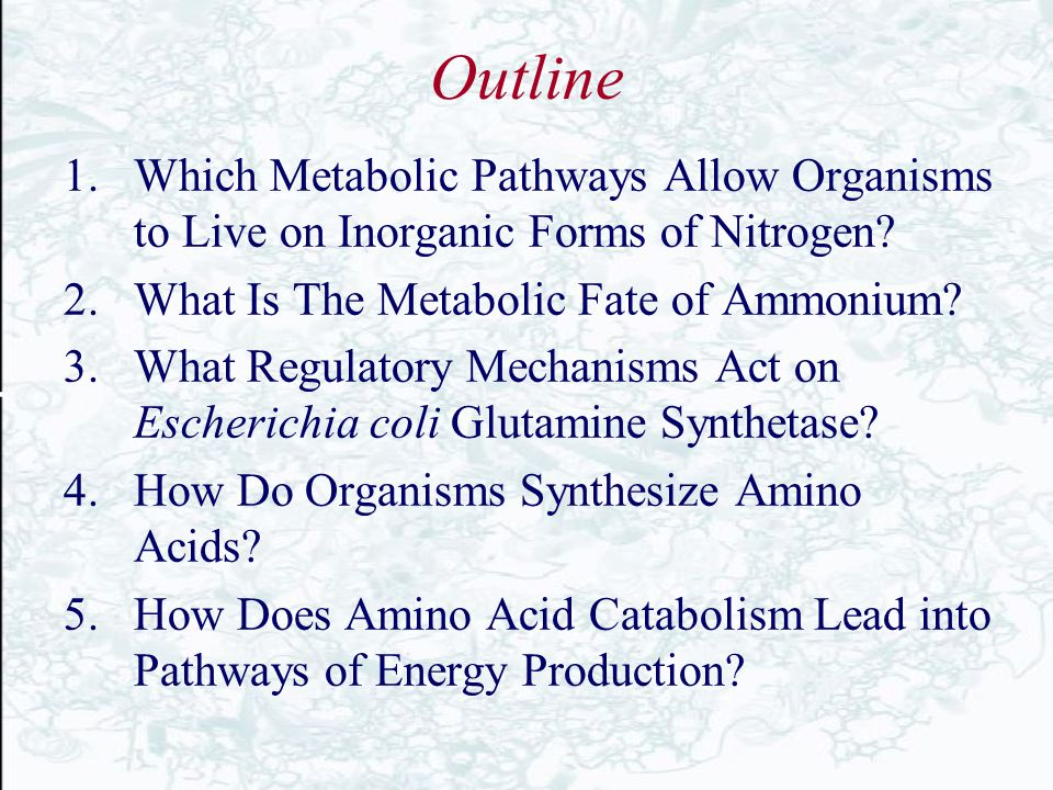Outline 1.Which Metabolic Pathways Allow Organisms to Live on Inorganic Forms of Nitrogen? 2.What Is The Metabolic Fate of Ammonium? 3.What Regulatory