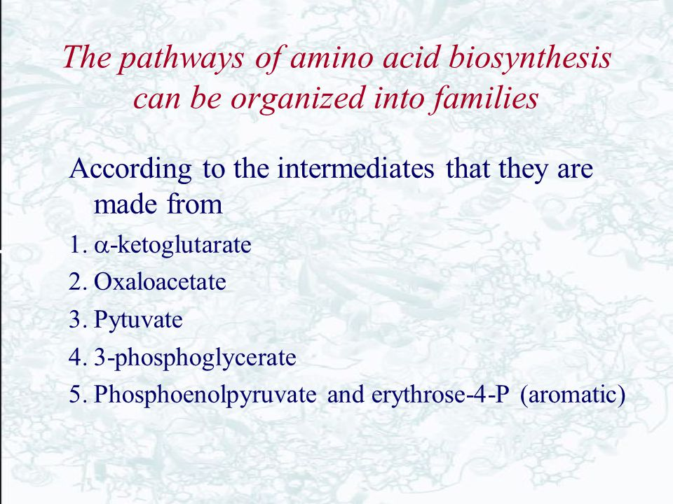 The pathways of amino acid biosynthesis can be organized into families According to the intermediates that they are made from  -ketoglutarate 2.Oxa