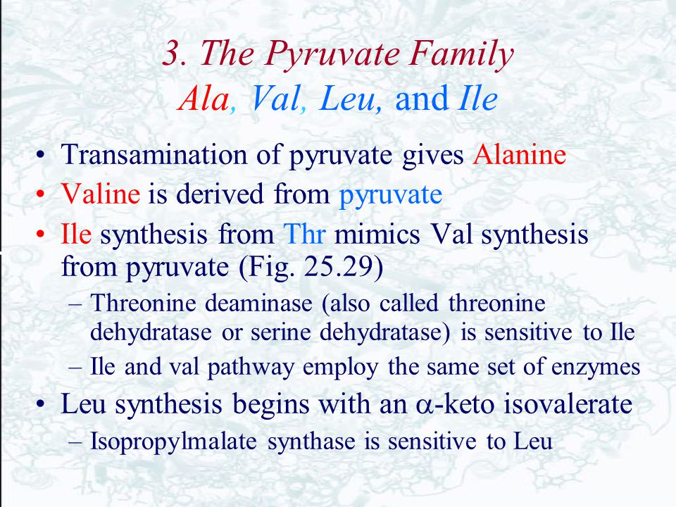 3. The Pyruvate Family Ala, Val, Leu, and Ile Transamination of pyruvate gives Alanine Valine is derived from pyruvate Ile synthesis from Thr mimics V
