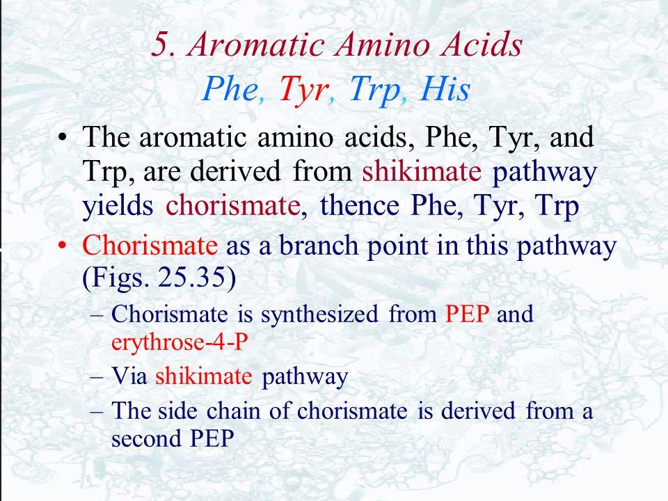 5. Aromatic Amino Acids Phe, Tyr, Trp, His The aromatic amino acids, Phe, Tyr, and Trp, are derived from shikimate pathway yields chorismate, thence P