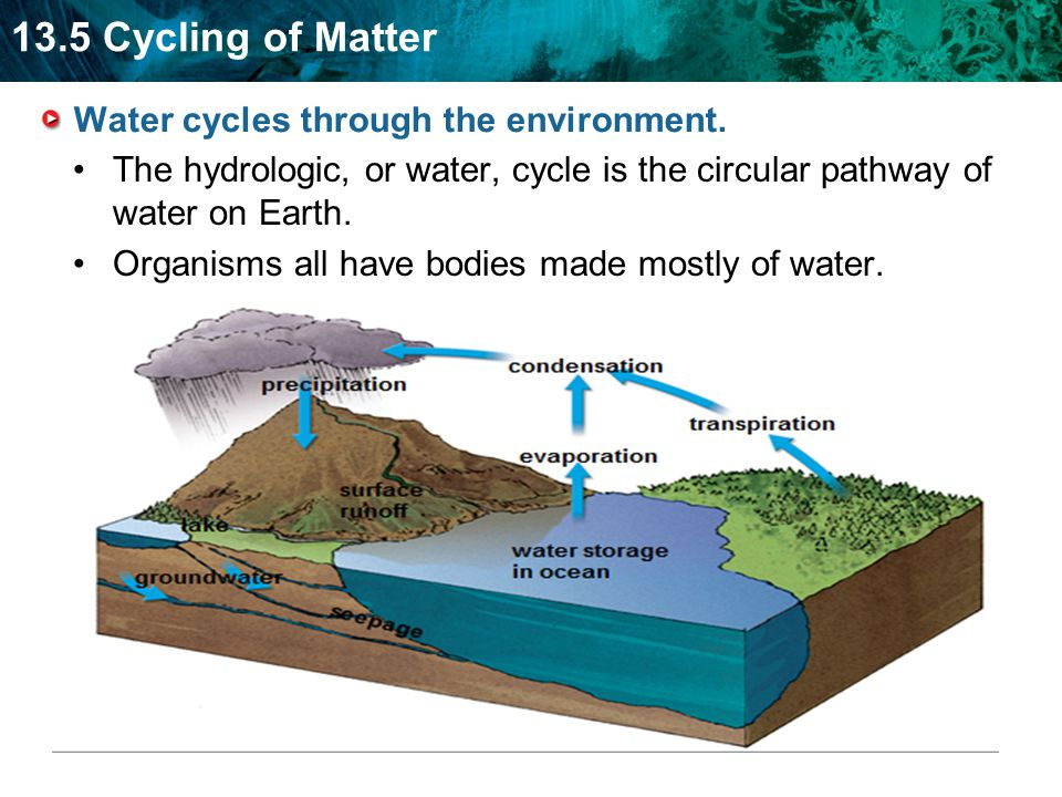 13.5 Cycling of Matter Water cycles through the environment.