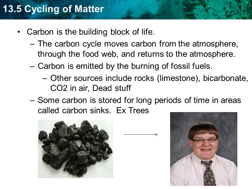 13.5 Cycling of Matter Carbon is the building block of life.