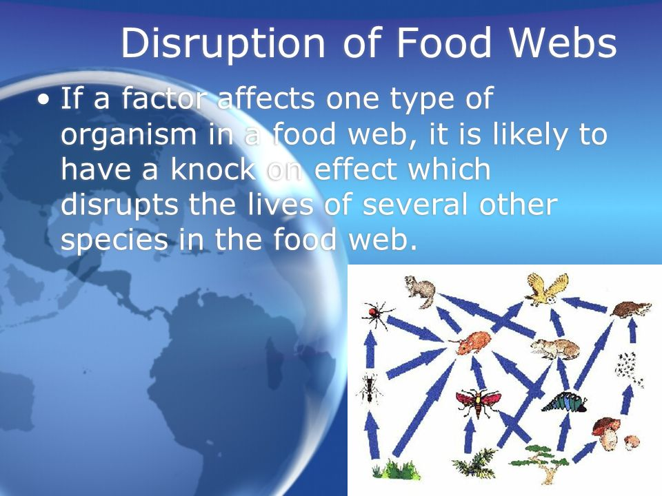 Food Webs Food Webs Green plants are the starting point in all food chains.