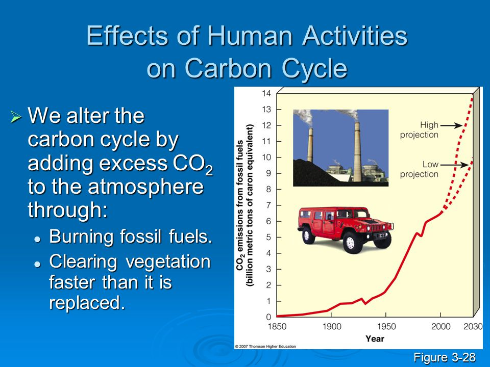 Effects of Human Activities on Carbon Cycle  We alter the carbon cycle by adding excess CO 2 to the atmosphere through: Burning fossil fuels. Burning