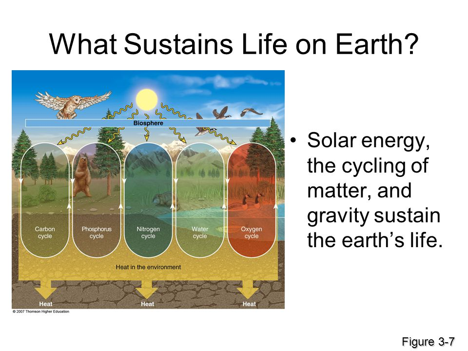What Sustains Life on Earth? Solar energy, the cycling of matter, and gravity sustain the earth's life. Figure 3-7
