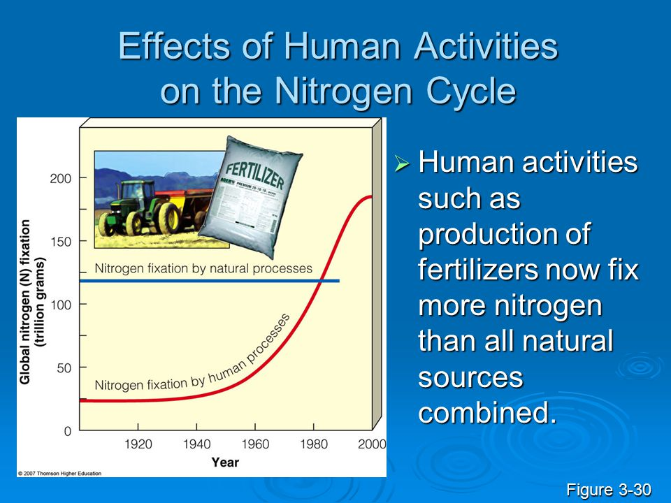 Effects of Human Activities on the Nitrogen Cycle  Human activities such as production of fertilizers now fix more nitrogen than all natural sources