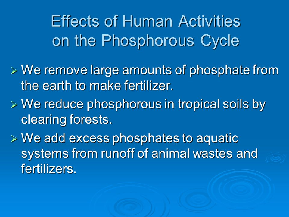 Effects of Human Activities on the Phosphorous Cycle  We remove large amounts of phosphate from the earth to make fertilizer.  We reduce phosphorous