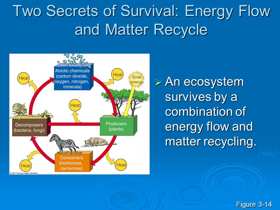 Two Secrets of Survival: Energy Flow and Matter Recycle  An ecosystem survives by a combination of energy flow and matter recycling. Figure 3-14