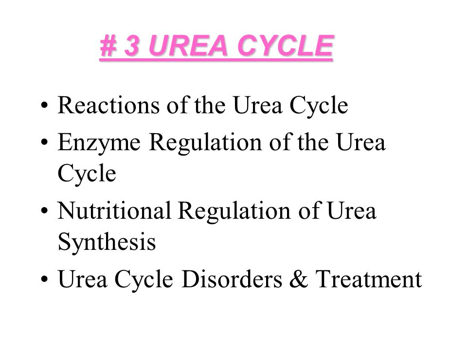 Urea Cycle 1.GDH is the major agency responsible for ammonium production.