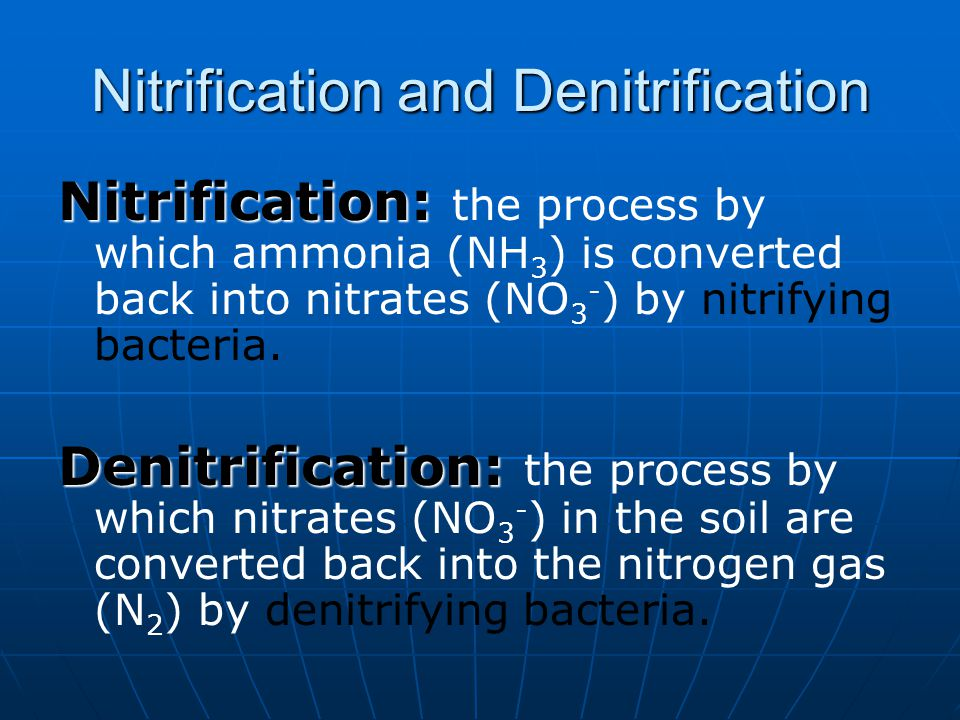 Nitrification and Denitrification Nitrification: Nitrification: the process by which ammonia (NH 3 ) is converted back into nitrates (NO 3 - ) by nitr