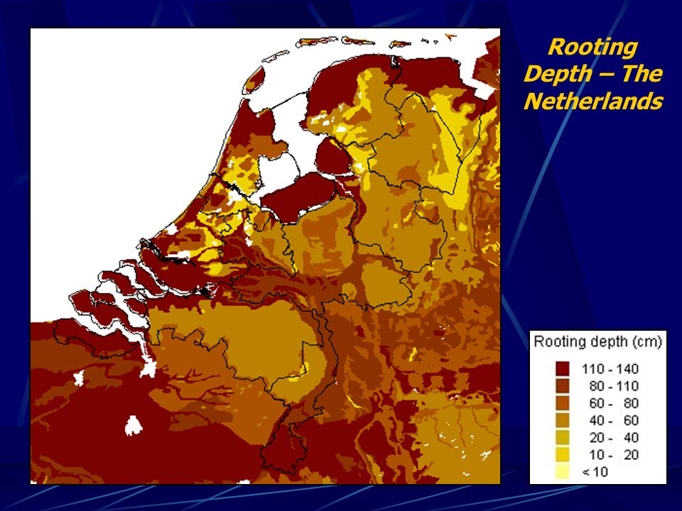 Rooting Depth – The Netherlands