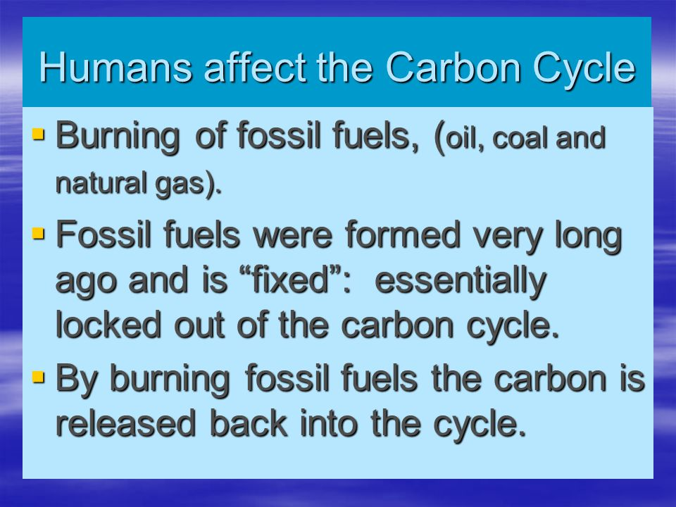 """Humans affect the Carbon Cycle  Burning of fossil fuels, ( oil, coal and natural gas).  Fossil fuels were formed very long ago and is """"fixed"""": essen"""