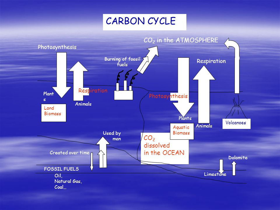 CARBON CYCLE Volcanoes Burning of fossil fuels Photosynthesis Respiration CO 2 in the ATMOSPHERE CO 2 dissolved in the OCEAN FOSSIL FUELS Photosynthes