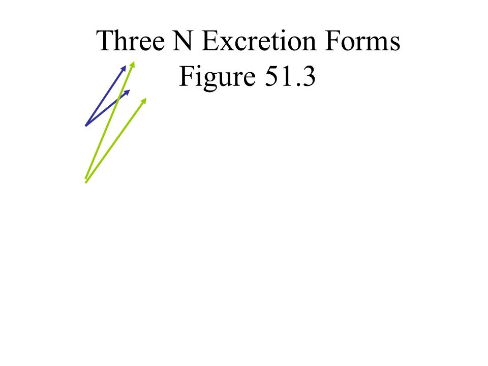 Three N Excretion Forms Figure 51.3
