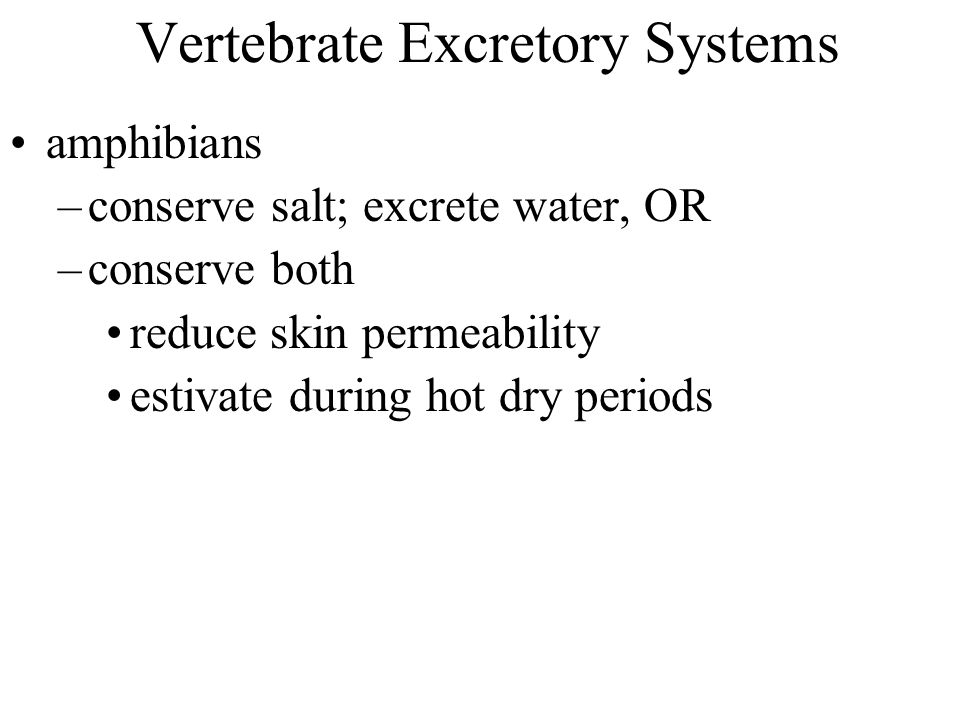 Vertebrate Excretory Systems amphibians –conserve salt; excrete water, OR –conserve both reduce skin permeability estivate during hot dry periods