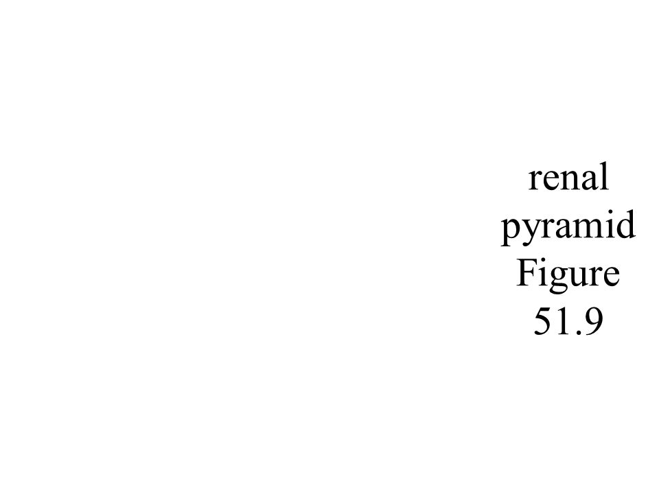 renal pyramid Figure 51.9
