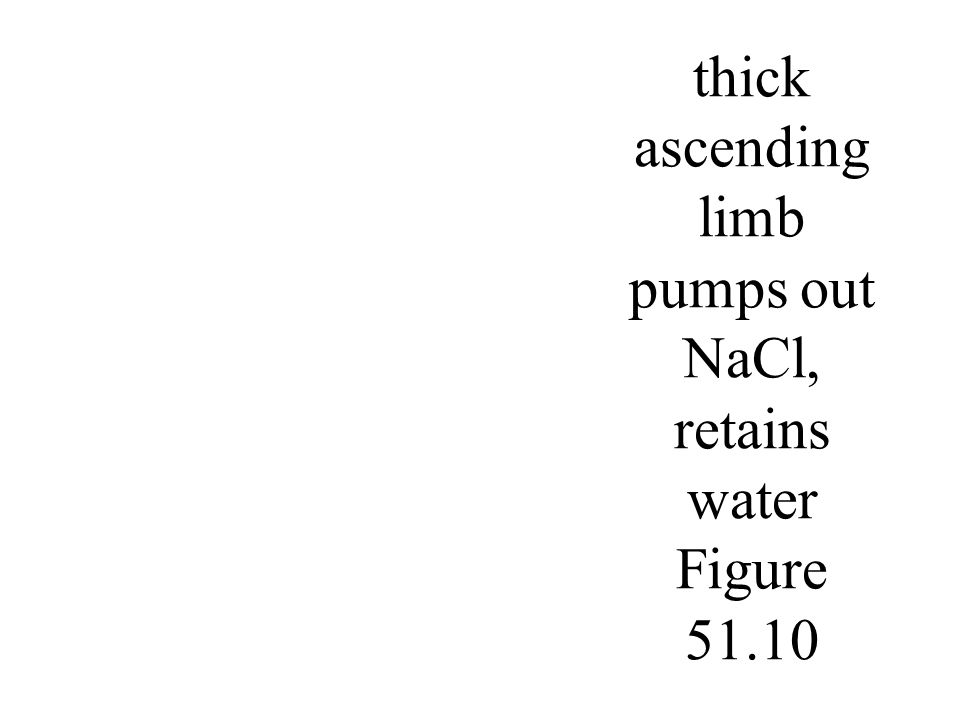 thick ascending limb pumps out NaCl, retains water Figure 51.10