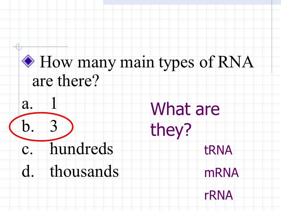 How many main types of RNA are there? a.1 b.3 c.hundreds d.thousands What are they? tRNA mRNA rRNA