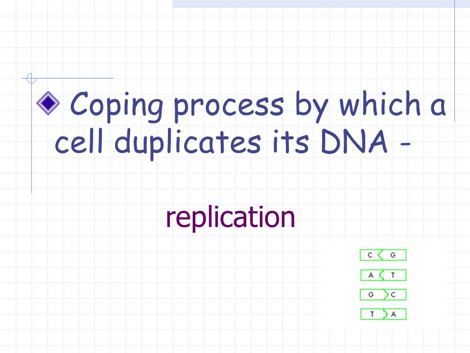 replication Coping process by which a cell duplicates its DNA -
