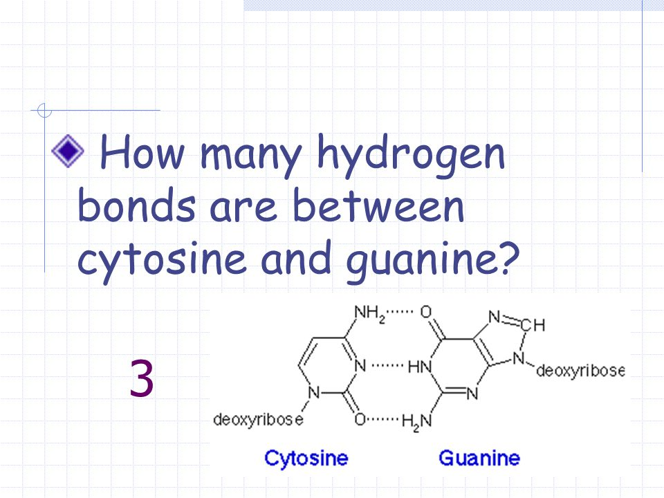 3 How many hydrogen bonds are between cytosine and guanine?
