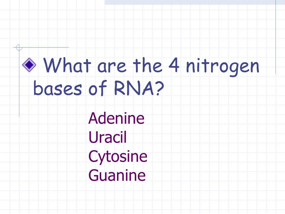 Adenine Uracil Cytosine Guanine What are the 4 nitrogen bases of RNA?