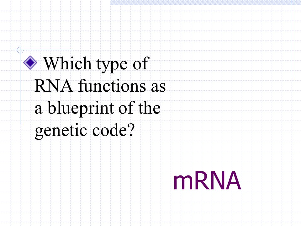 mRNA Which type of RNA functions as a blueprint of the genetic code?