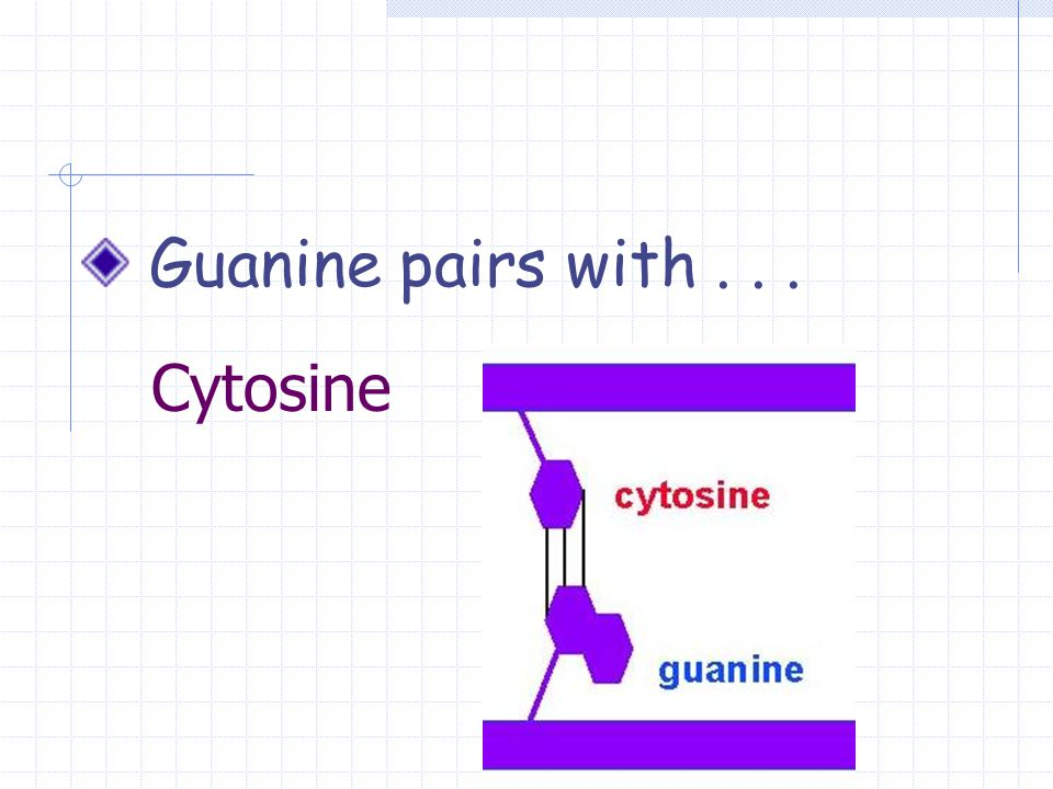 Cytosine Guanine pairs with...