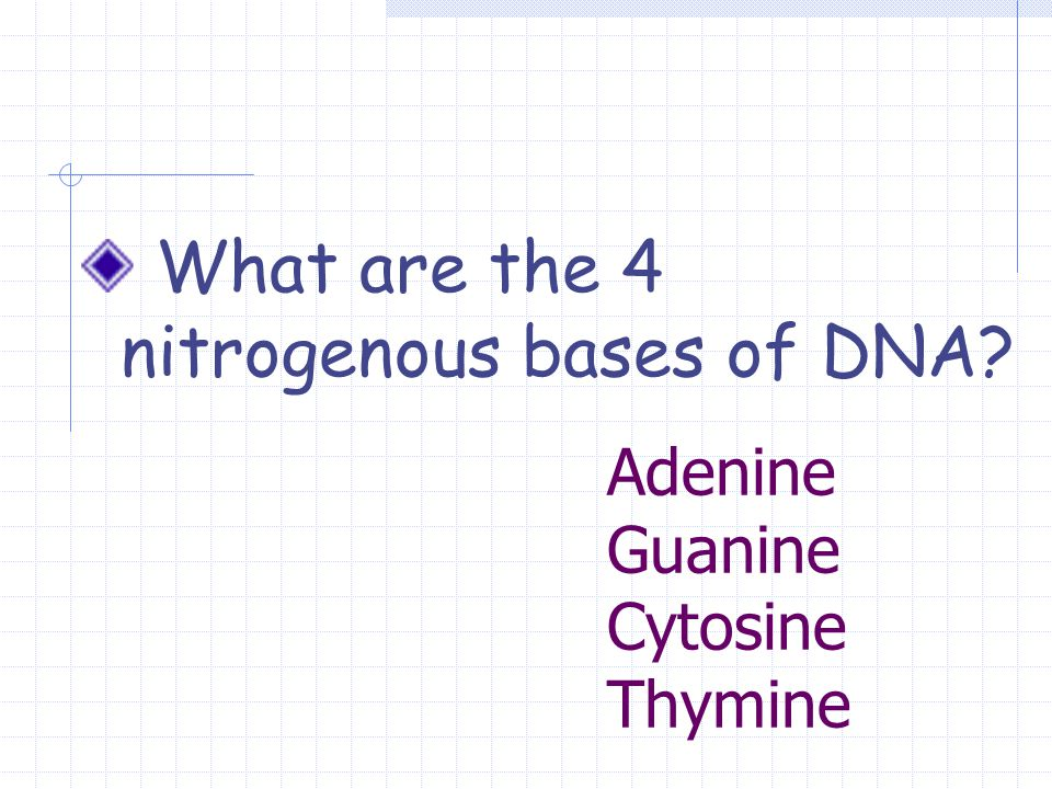 Adenine Guanine Cytosine Thymine What are the 4 nitrogenous bases of DNA