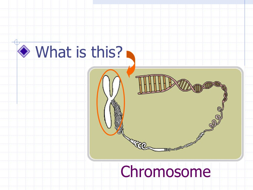 Chromosome What is this?
