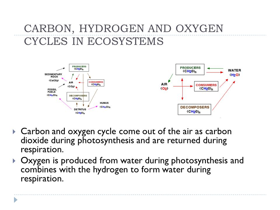 CARBON, HYDROGEN AND OXYGEN CYCLES IN ECOSYSTEMS  Carbon and oxygen cycle come out of the air as carbon dioxide during photosynthesis and are returne