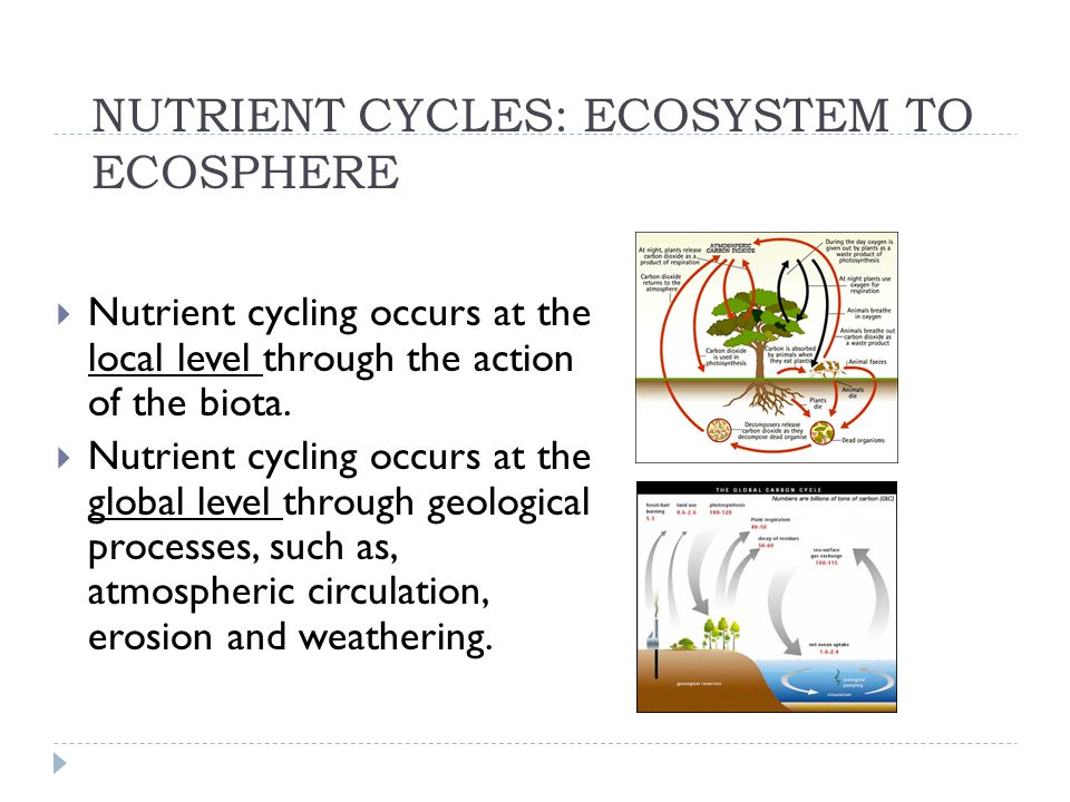 NUTRIENT CYCLES  The atoms of earth and life are the same; they just find themselves in different places at different times.
