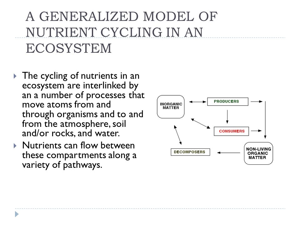 Nutrient Compartments in a Terrestrial Ecosystem  The organic compartment consists of the living organisms and their detritus.