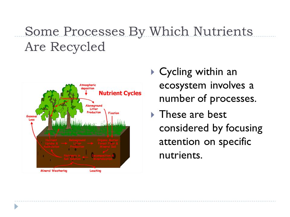 Some Processes By Which Nutrients Are Recycled  Cycling within an ecosystem involves a number of processes.  These are best considered by focusing a
