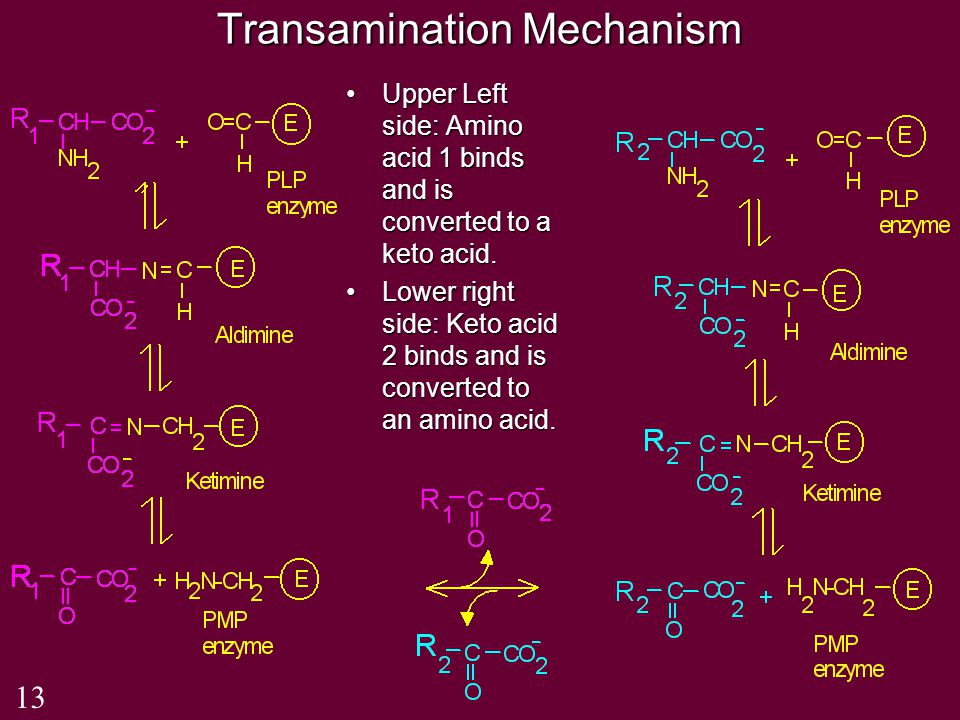 Transamination Mechanism Upper Left side: Amino acid 1 binds and is converted to a keto acid.Upper Left side: Amino acid 1 binds and is converted to a keto acid.