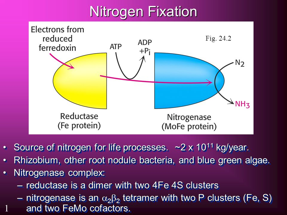 Nitrogen Fixation Source of nitrogen for life processes.