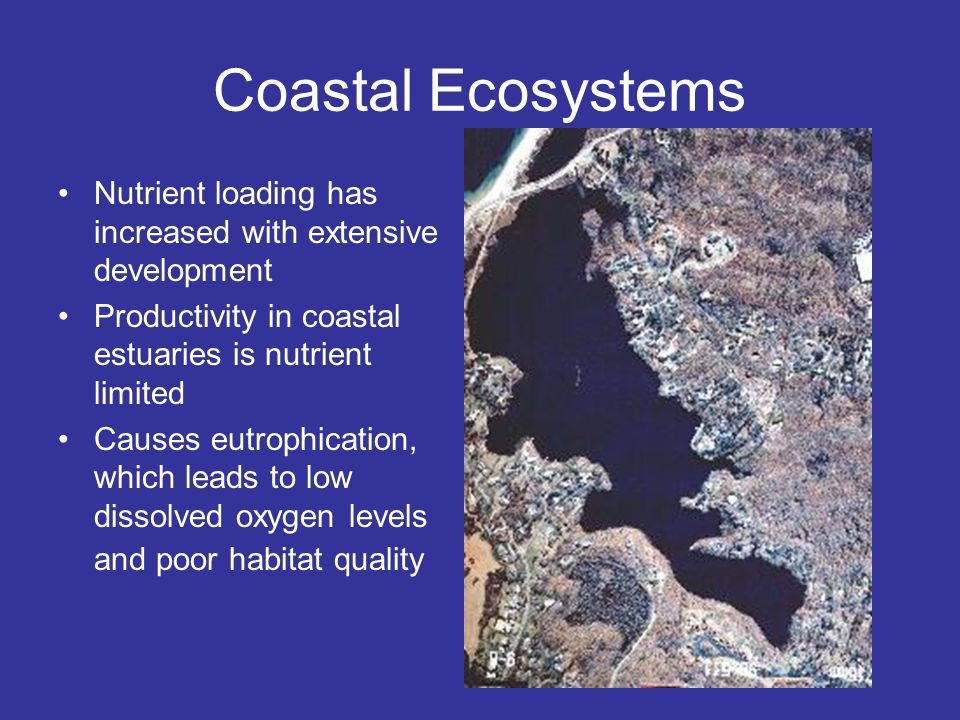 Coastal Ecosystems Nutrient loading has increased with extensive development Productivity in coastal estuaries is nutrient limited Causes eutrophication, which leads to low dissolved oxygen levels and poor habitat quality