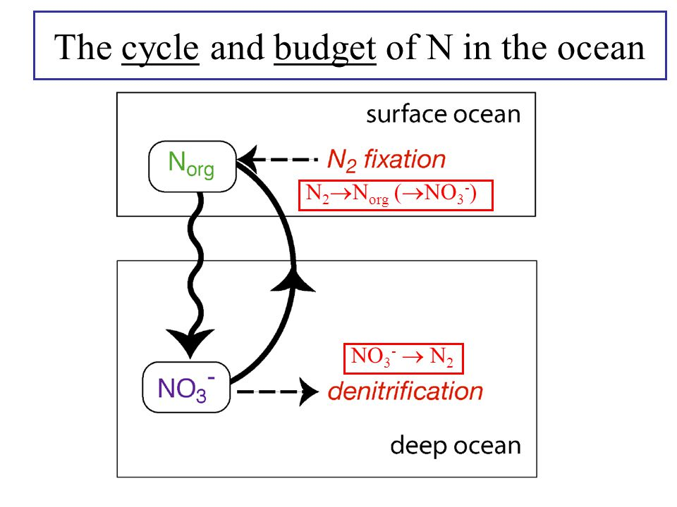 The cycle and budget of N in the ocean NO 3 -  N 2 N 2  N org (  NO 3 - )