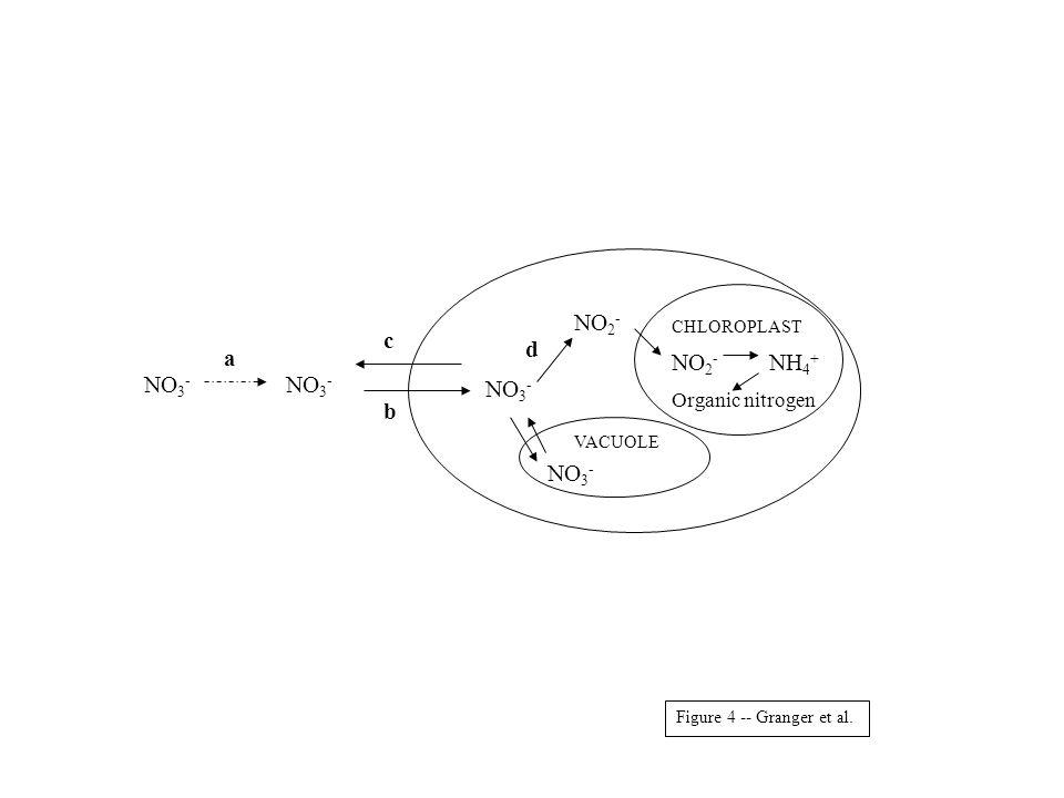 NO 3 - NO 2 - NO 3 - NO 2 - NH 4 + Organic nitrogen VACUOLE CHLOROPLAST a b c d Figure 4 -- Granger et al.