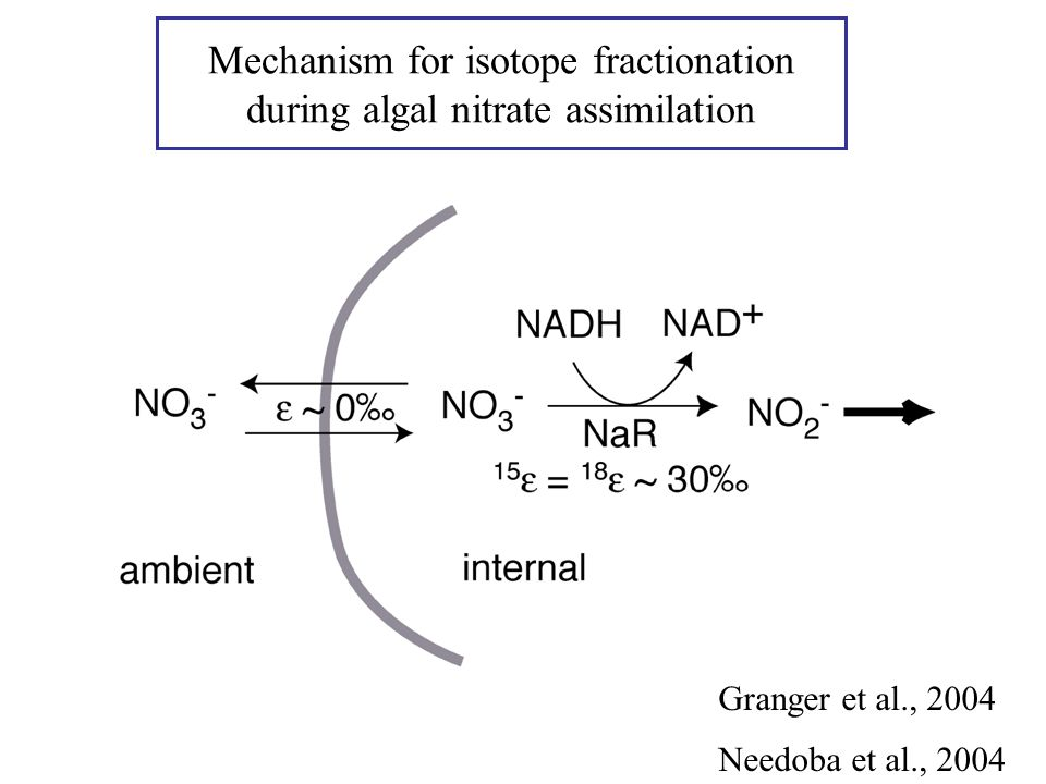 Mechanism for isotope fractionation during algal nitrate assimilation Needoba et al., 2004 Granger et al., 2004